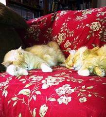 Norio and Nobuo, 2013 (sjrankin) Tags: shinglesprings northerncalifornia california sleep livingroom couch nobuo norio cat animal autoprocessed processed edited 28february2018 30july2013 picturebynaomi