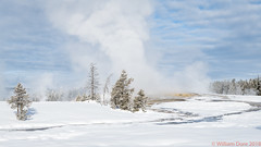 Boiling Over (Images by William Dore) Tags: winter winterlandscape landscape geysers trees snow winterwonderland yellowstone outside outdoors nikon nikond850 bluesky freezing cold weather usa wyoming