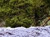 Mount Field Waterfalls 4 (Remko Tanis) Tags: australia field forest mount national nature park tasmania water waterfall