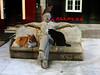 Petrificado (seguicollar) Tags: arte coruña álvarocunqueiro escultura estatua banco escritor gallego sentado gatos paloma petrificado