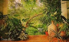 Chanticleer Gardens (socalgal_64) Tags: carolynlandi usa pennsylvania landscape nature outdoors outside trees grass stilllife vase plants window gardens chanticleer chanticleergardens spring estate waynepa coth5 texturebybefunky befunky texture