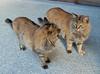 "47-Yasakaji-007 (photozaki) Tags: ""dogs cats"" dog dogs inu cat cats neko shikoku japan ohenro88 ohenro pilgrimage"
