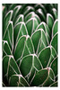 Green Pattern (pratyush-pandya.com) Tags: voigtlander voigtländer mirrorless nature naturephotography macro macrophotography sony ilce7rm2 a7r2 arizona southwest abstract green desert