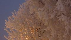 IMG_4341 (Mr Thinktank) Tags: raureif frost