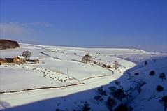 a blanket of white (Ron Layters) Tags: bettfieldfarm snow winter kinder rushupedge kinderscout chapelenlefrith peakdistrict sheep wall white landscape bluesky highpeak england derbyshire unitedkingdom slidefilmthenscanned slide transparency fujichrome velvia leica r6 leicar6 ronlayters