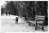 Can I Interest You In A Stick? (John Penberthy LRPS) Tags: d750 ham johnpenberthy nikon richmond bench dog people snow walkers