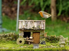 Robin with small cottage  (4) (Simon Dell Photography) Tags: robin bird garden small cottage old english country home view micro village house barn tiny modle model grind stone nature wildlife simon dell photography sheffield shirebrook valley s12 2018 spring image rambo yorkshire