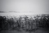 A winter day (Antti Tassberg) Tags: 24mmts landscape pitkäjärvi jää talvi bw järvi suomi texture 24mm blackandwhite finland ice lake lens monochrome prime scandinavia tiltshift winter espoo uusimaa fi