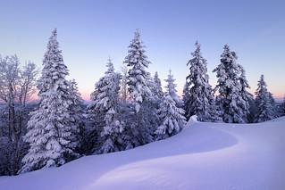 Wintery Scene - Vue-des-Alpes - Switzerland