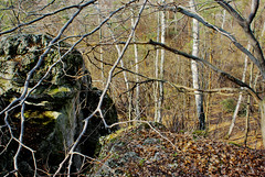 159 I grow on a rocky ground (Hejma (+/- 5400 faves and 1,7 milion views)) Tags: skały wapienne drzewa krzewy las liście