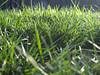 00095 (alankaplan2) Tags: grass green view blades yard