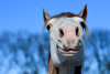 Keep Smiling (Christina Draper) Tags: horse smile equine pony equestrian muzzle whiskers sky nikon d500