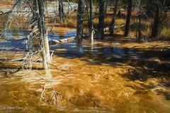 A Rough Environment for Trees (buffdawgus) Tags: westernstatesroadtrip geyserbasin landscape canonef24105mmf4lisusm topazsw yellowstonenationalpark lightroom6 canon5dmarkiii wyoming