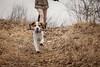 puppy beagle (rwfoto_de) Tags: tier hund beagle dog puppy