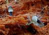 Toadstools (Bugldy99) Tags: fungus nature mushroom toadstool