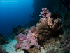 Arco (chevalbenjamin) Tags: philippines visayas bohol underwaterphotography underwater scubadiving dive plongéesousmarine corals plongée seaocean nature