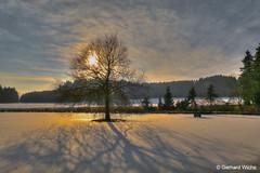 Sunset at the frozen pond (GerWi) Tags: baum sunset sonnenuntergang teich pond fz1000 gegenlicht licht light sonne sun himmel sky clouds wolken schäfchenwolken eisdecke schatten