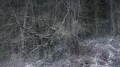 Outside (jellyfire) Tags: church frost snow suffolk tudor winter blizzard countryside leeacaster rural wwwleeacastercom