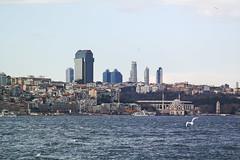SDQH0275 (otumay) Tags: turkey istanbul sigmasdquattroh sigma105mmf28macro