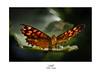 FALL (Marina.Mangas) Tags: mariposa macrophotography macrophoto macro macrofotografia butterfly animales animal animals insect insecto insectos nikon