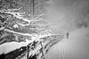     i oO0o (Heinrich Plum) Tags: heinrichplum plum fuji xe2 xf1855mm winter winterlandschaft nebel fog snow snowcoveredtrees snowymountain skitour skitouring berchtesgadenerland bavaria bayern schnee blackwhite blackandwhite bnw alpen alps