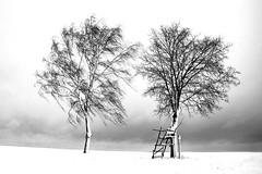 Ungleiche Brüder (FODA_82) Tags: schnee snow winter tree baum landschaft eisig icy wind sturm storm weissenburg franken deutschland bayern nikon d750 natur nature ruhe quiet himmel stille silence
