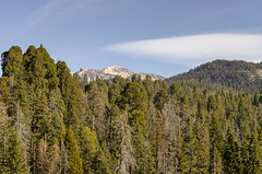 Sequoia Landscape III (rschnaible (Not posting but enjoying your posts)) Tags: sequoia national park us usa west western california sierra nevada mountains landscape rugged moro rock area