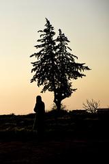 Tree and Women (MenetuPhoto) Tags: monochrome tree life blackwhite blackandwhite sunset black view siluet shadow