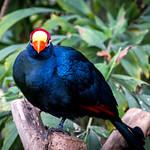 Klein Costa Rica thumbnail