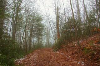 Foggy fire road 2