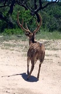 Texas Private Whitetail Lodge - Junction 34