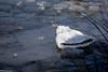 Koud hè.... (R.Z.fotografie) Tags: veluwe icecap water natuur ijsmuts ijs ice cold koud netherlands nederland nunspeet