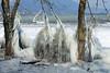 Sculptures hivernale 2 (jean-daniel david) Tags: hiver glace gel nature froid lac lacdeneuchâtel réservenaturelle suisse suisseromande switzerland yverdonlesbains eau arbre sculpture sculpturedeglace
