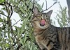 4,8 (isabelruizperdiguero) Tags: gatito lengua olivo