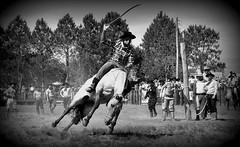 Felipe Félix (Eduardo Amorim) Tags: gaúcho gaúchos gaucho gauchos cavalos caballos horses chevaux cavalli pferde caballo horse cheval cavallo pferd crioulo criollo crioulos criollos cavalocrioulo cavaloscrioulos caballocriollo caballoscriollos pampa campanha fronteira pelotas riograndedosul brésil brasil sudamérica südamerika suramérica américadosul southamerica amériquedusud americameridionale américadelsur americadelsud cavalo 馬 حصان 马 лошадь ঘোড়া 말 סוס ม้า häst hest hevonen άλογο brazil eduardoamorim gineteada jineteada