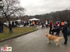 S1 Dog