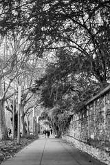 The streets of... Grenoble #35 (richardtostain) Tags: street rue bokeh wideopen noir black noirblanc blackwhite nb bw sony a7ii minolta mc 58mm f12