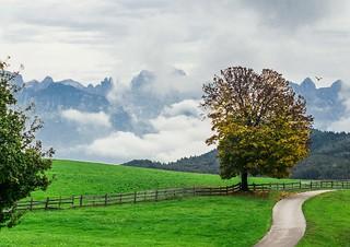 Alps...South Tyrol, Italy...