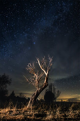 En el aire por la noche. / In the air at night. (Recesvintus) Tags: árbol tree night nocturna nightphotography nocturne stars starry estrellas estrellado cielo sky blue azul outdoor exterior airelibre countryside campo landscape paisaje longexposure largaexposición recesvintus wbpa tokina1116 fadalba