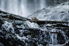 Bridal Veil Falls (samquattro) Tags: britishcolumbia hellobc explorebc explorecanada imagesofcanada wildlife chilliwack waterfall nature bc beautifulbc vancouvercanada westcoast