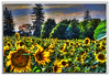 Sunflowers (A Work of Mark) Tags: sunflowers scenic color digitalpainting layers topazimpressions topazadjust photoshop sonomacounty yellow