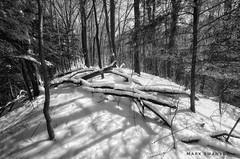 Fallen Timber (mswan777) Tags: shadow 1020mm sigma d5100 nikon white black monochrome ansel nature outdoor bridgman michigan winter snow dune ridge scenic tree wood forest