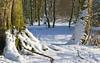 Footprints in the snow (robin denton) Tags: knavesmirewoods knavesmirewood yorkshire york northyorkshire nature snowscene snow trees woodlandtrust woods woodland weather footprint footsteps landscape uk britain britishcountryside countryside england outdoor sunlight