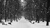 real snow (recreated) (Darek Drapala) Tags: snow winter warsaw warszawa panasonic poland polska panasonicg5 park white nature lumix light cold bw blackwhite blackandwhite