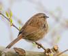Round. (Omygodtom) Tags: bokeh wildlife spring round nikon70300mmvrlens d7100 diamond star sparrow common