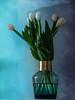 Vase with white tulips (Zrno2009) Tags: white tulips blue vase