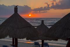 The Early Bird Gets the Beach Umbrella (aaronrhawkins) Tags: sunrise tulum mexico caribbean bahiaprincipe mayanriviera rivieramaya yucatan peninsula morning early resort vacation silhouette tropical paradise aaronhawkins