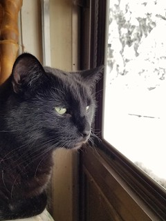 Des is fascinated by falling snowflakes