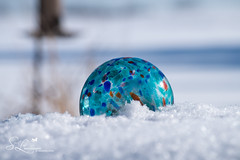 Speckled in Winter (amndcook - happy & blessed) Tags: photo speckled winter season nature ball amandacook cold garden photograph macro outside outdoors glass michigan pentax spiritledphotography snow
