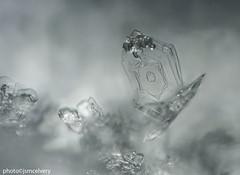 dsc_8878to8892snowflake1jsm (JayEssEmm) Tags: snow snowflake snowflakes macro massachusetts ma jsmcelvery mcelvery